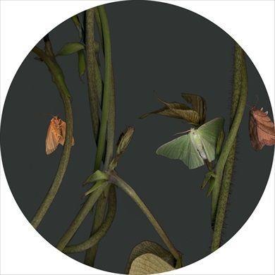 Sandra Kantanen: Untitled (Moth 3), 2014