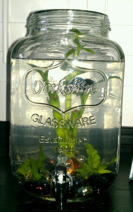 Water dispenser betta tank home inspiration pinterest for Best water for betta fish