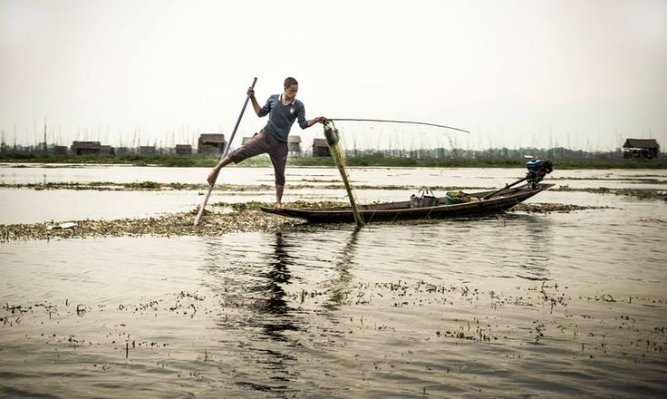 """There are a lot of fishermen in Inle Lake (the second largest lake in Myanmar), all of them use a technique to paddle called """"One Leg Paddling"""", which consists of standing on one leg on the extreme of the boat and wrapping their other leg around the the oar.  The reason for this way of paddling is because there are many reeds and water plants in the lake, and if they row sitting down in the boat they can't see them.  Net Fisherman - #Inle Lake, #Myanmar"""