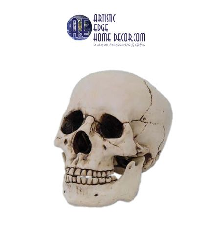 Human Skull Cast Resin Human Skull $29.95 Jaw moves and is a separate piece from skull.