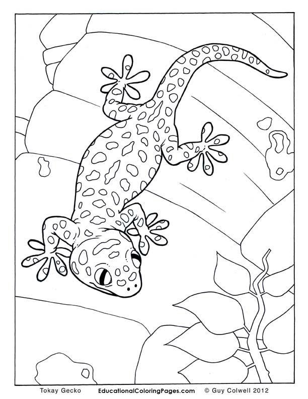 Gecko Colouring Steine Bemalen Painted Rocks