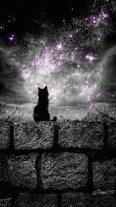 Black Cat GIF | Starry Space Sky | Witch Art | Pagan | Halloween | Stars | Night