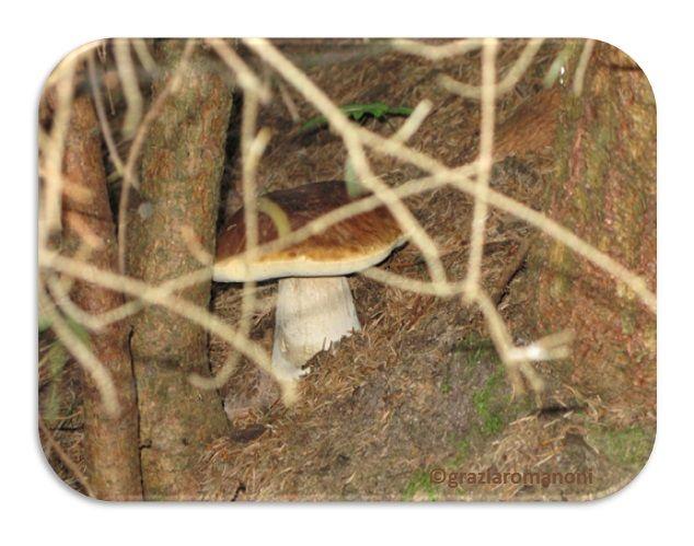 Qualcosa di me: Andar per funghi... Una mia grande passione!
