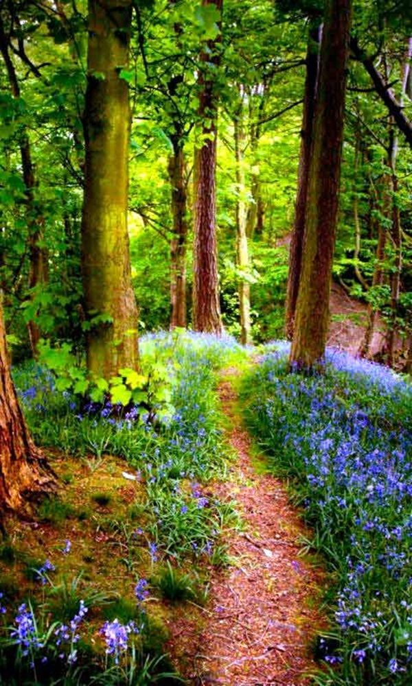 Fascinating Photographs of Forest Paths to another world (18)
