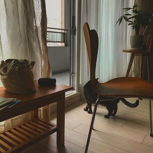 外は雨...🌧 こんな日も 窓全開にして🌈 部屋の空気を入れ替えて🍃 まこは 確認🐾 確認🐾 確認終了✨😸 ※天気が悪いのもいいな。 レースカーテンから漏れる光のブルーの色。透明でいい色だな。(ひとりごと💭) #猫#ねこ #ネコ#ねこのいる生活 #猫との暮らし #ねこ部 #ねこすたぐらむ #cat #catlover #愛猫 #catsofinstagram #catstagram #ねこあつめ #ねこら部 #ねこ好き #猫好き #photooftheday #catgram #カメラ女子 #写真撮ってる人と繋がりたい #写真部 #cats #写真好きな人と繋がりたい #カメラ好きな人と繋がりたい #写真を撮るのが好きな人と繋がりたい #nofilter #加工なし