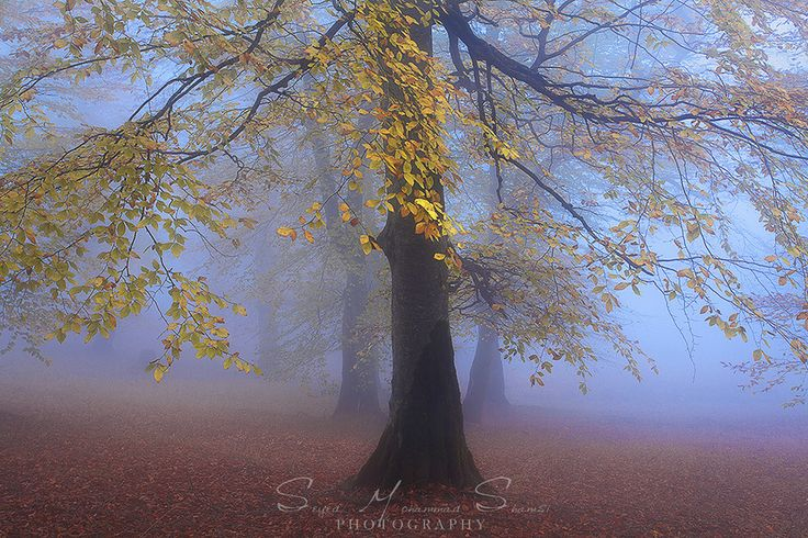 Autumnal  Silence by Seyed Mohammad  Shamsi
