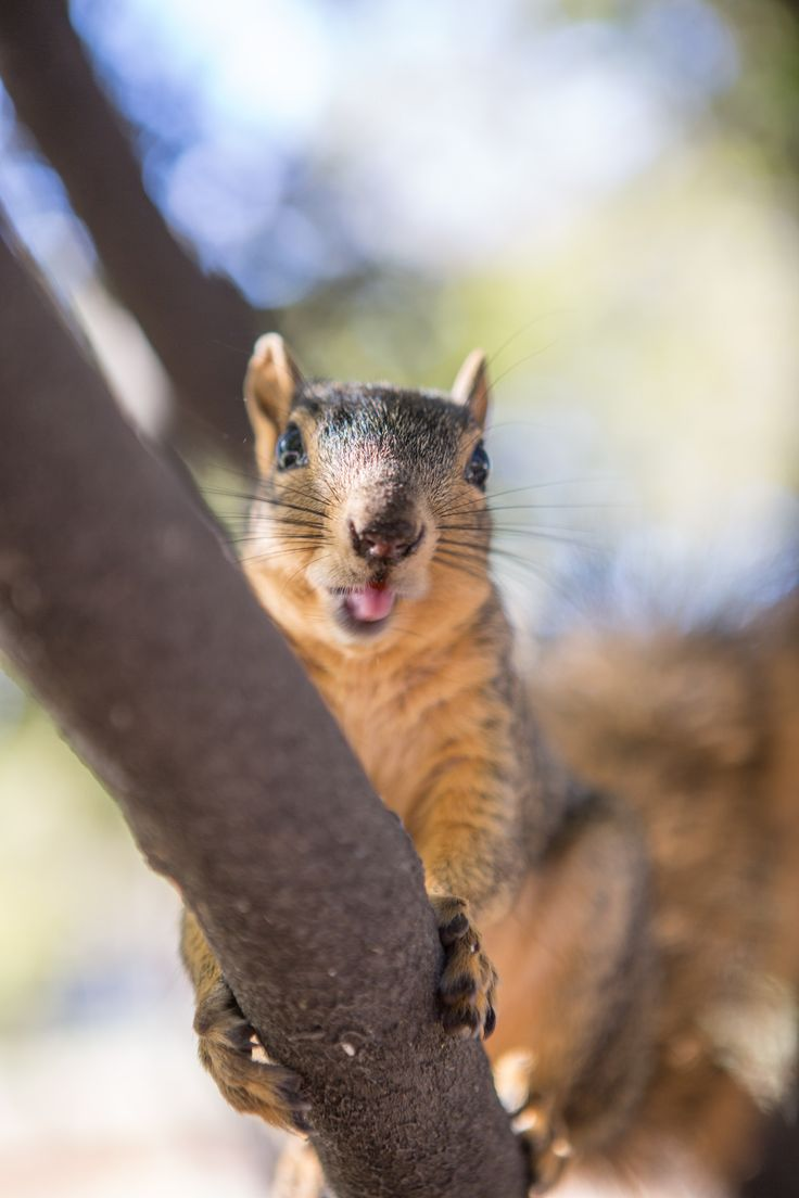 Hella Damn Squirrels