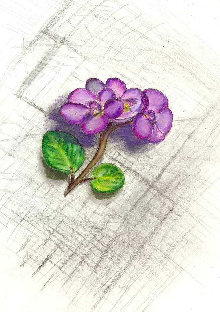 Violet Flower Tattoo Designs: African Violet
