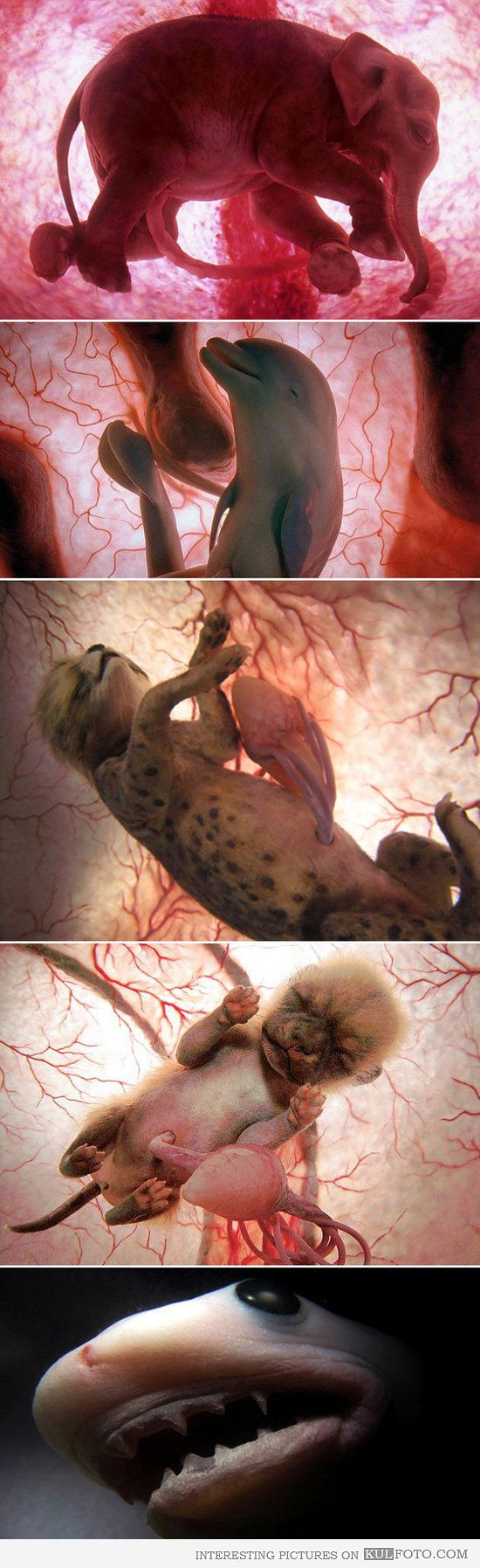 Best WOMB Images On Pinterest Maze Celebrities And Child - 14 incredible photos animals inside womb