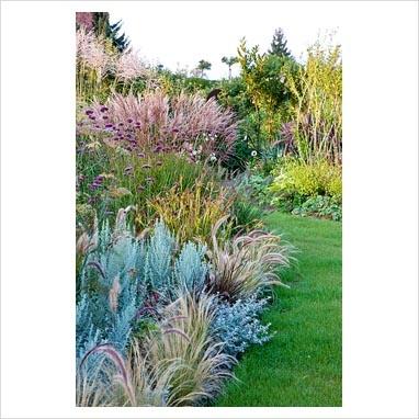 17 best ideas about pennisetum setaceum on pinterest for Ornamental grass border plants