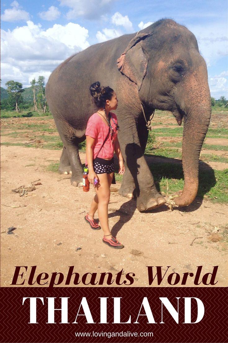 elephants world, elephant sanctuary, thailand, elephants, overnight elephant program, humane elephant sanctuary, save the elephants, kanchanaburi, near bangkok, feed elephants, bathe elephants, love elephants
