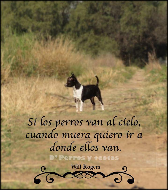 Frase de #Perros  #Chihuahua By @D' perros y mascotas