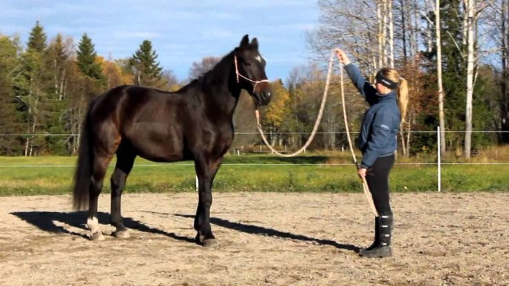 Parelli 7 games - Natural horsemanship