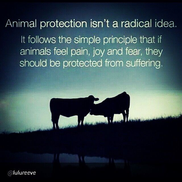 Animal protection isn't a radical idea. It follows the simple principle that if animals feel pain, joy and fear, they should be protected from suffering.