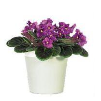 Best 25 low maintenance plants ideas on pinterest low for Low maintenance office plants