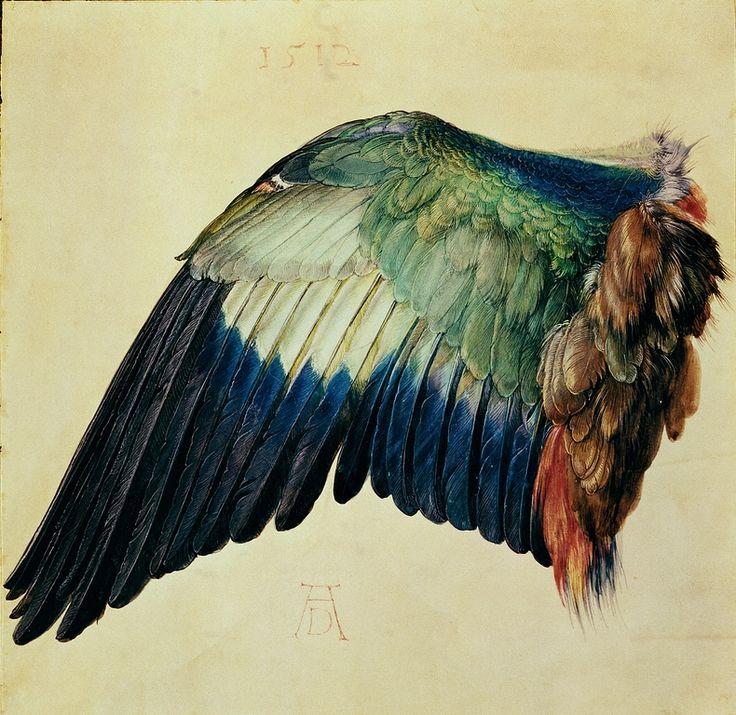 Wing of a Blue Roller - Albrecht Dürer, 1512