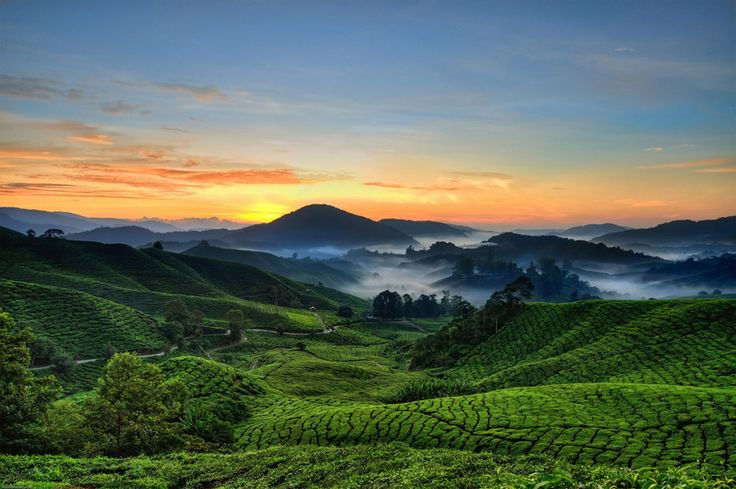 Experience the highlights of Malaysia on a 3-night tour from Kuala Lumpur to Penang! Overnight stays include luxury accommodation at the Strawberry Park Resort in the Cameron Highlands and the Bayview Beach Resort along Batu Ferringhi in Penang. Explore a tea plantation, the Sam Poh Tong cave temple, the Kuala Sepetang mangrove forest and UNESCO World Heritage-listed Georgetown, including Kek Lok Si Temple and a trishaw ride.