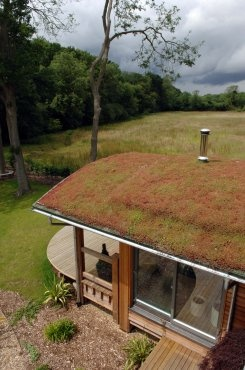 Moss sedum roof