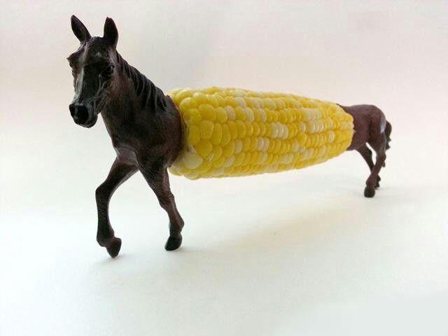 Corny horsey