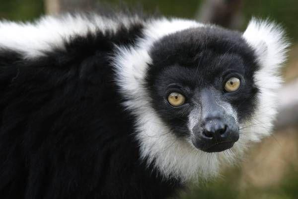Confira os animais exóticos do zoológico de Ueno, no Japão (foto:EPA)