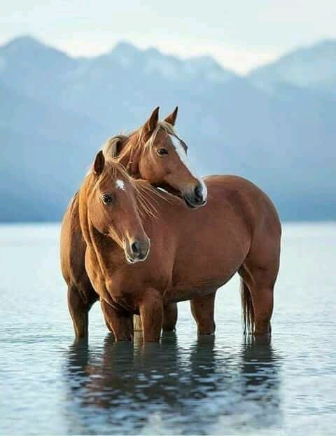 Beautiful horses in this perfect setting.