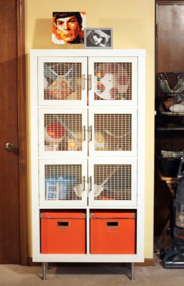 Can my rabbits catch Mycoplasma from my pet rat?