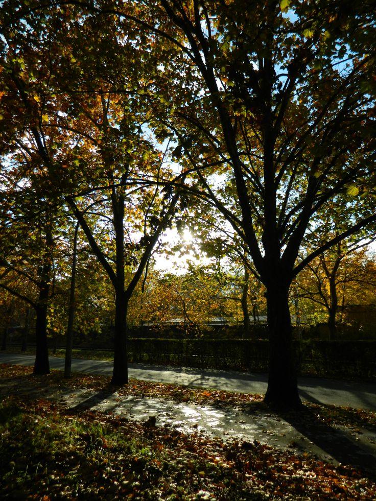 autumn ray - sunbeams