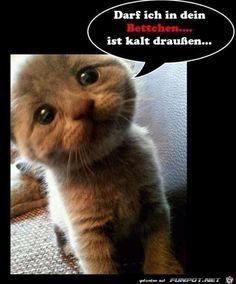 lustiges Bild 'Darf ich.jpg' von Kollin. Eine von 14329 Dateien in der Kategorie 'witzige Bilder' auf FUNPOT.
