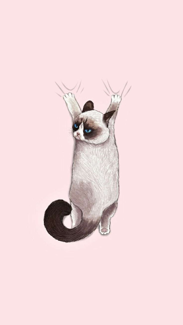 "Grumpy cat quotes: ""I'm gonna tear off ur tits"" iPhone X Wallpaper 441141725997384369 5"