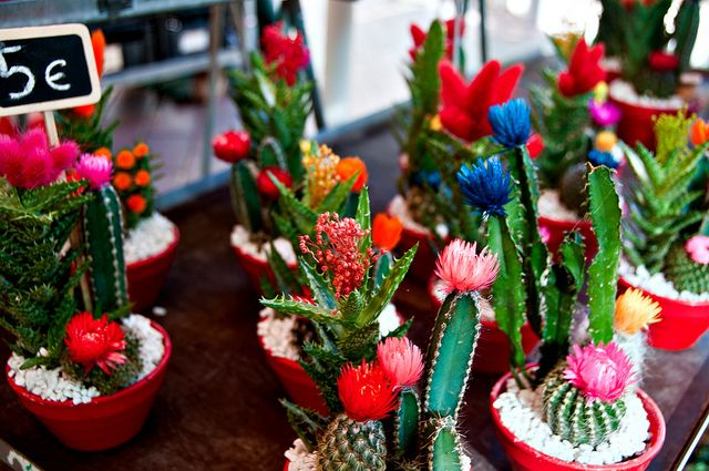 Small Cactus Garden Photos | Mini cactus, Cours Saleya | Flickr - Photo Sharing!
