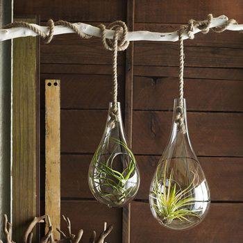木の枝にロープで吊るした個性的なテラリウム。 シンプルな植物を合わせたバランスが絶妙です!