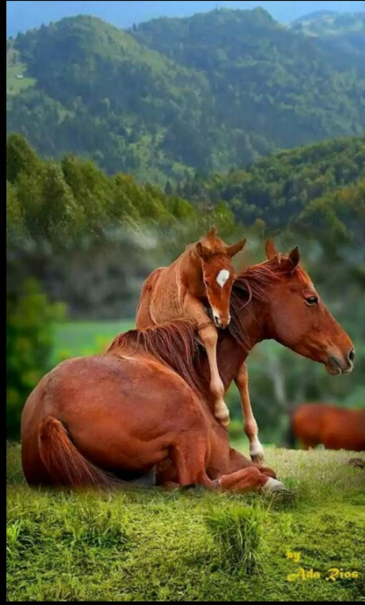 HORSE....aka nag, pony, foal, colt....a hoofed domesticated mammal with a flowing mane and tail used for riding, racing, and to carry and pull loads