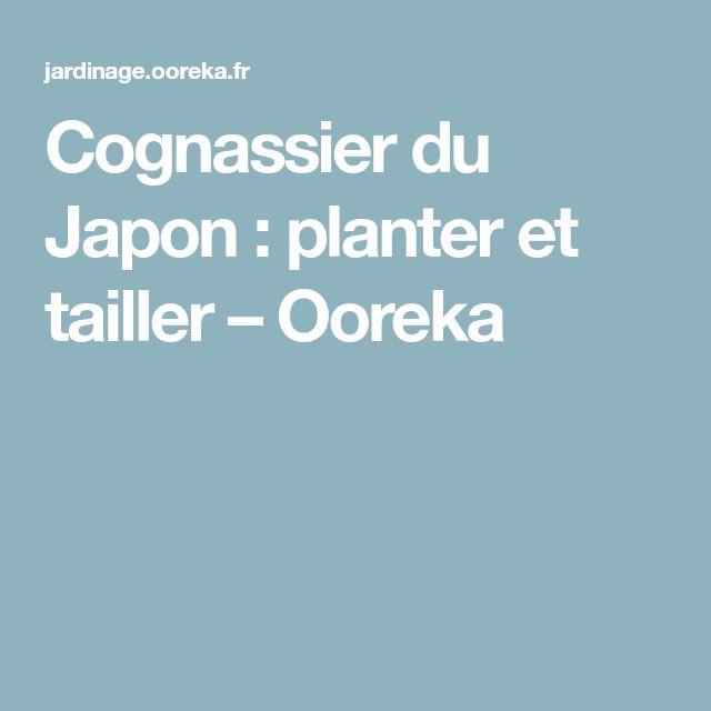 Cognassier du Japon: planter et tailler – Ooreka
