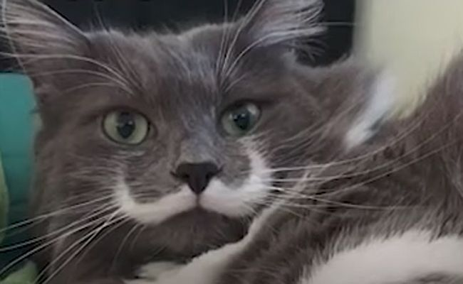 Daily Cute: Mustached Cat Becomes A Celebrity | Care2 Causes