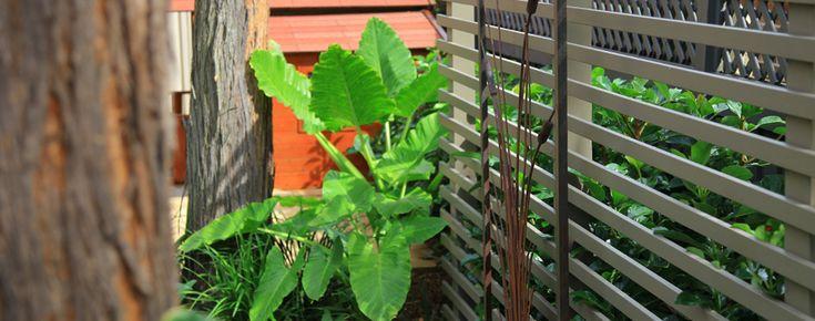 Lush plants in a soft, harmonious colour scheme