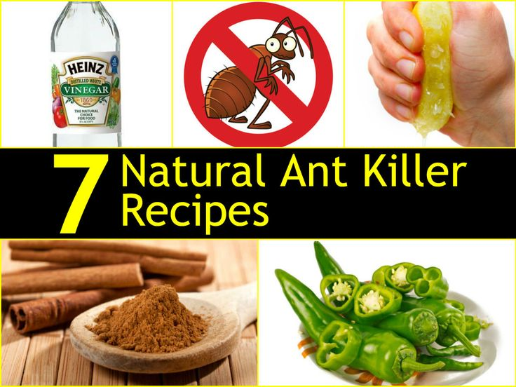 7 natural ant killer recipes: Soapy water, Jalapeno pepper sparay, cinnamon sprinkle, coffee grounds, lemon juice, vinegar,cayenne pepper.