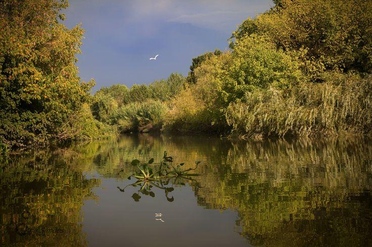 Reflected Nature - Entre Valada e Escaroupim- Portugal
