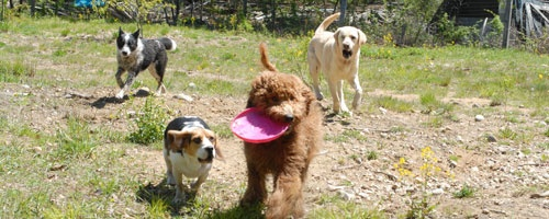 Happy Tails Pet Resort amp; Camp Muskoka: Who says dogs can39;t go on