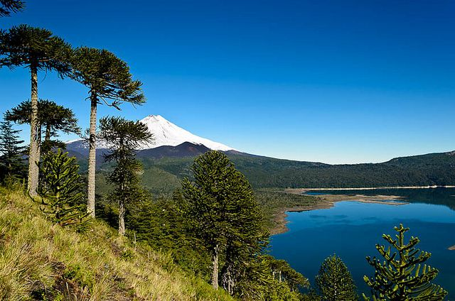 Llaima Volcano: Conguillo National Park, Chile