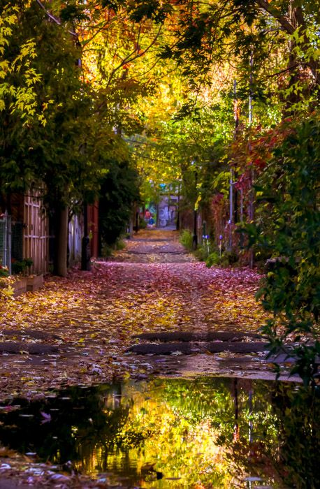 Autumn alley on Le Plateau, Montreal (Quebec, Canada) by Mike New. ISO 200 – 70mm – f5.6 – 1/125 sec (-2ev/0/+2ev)