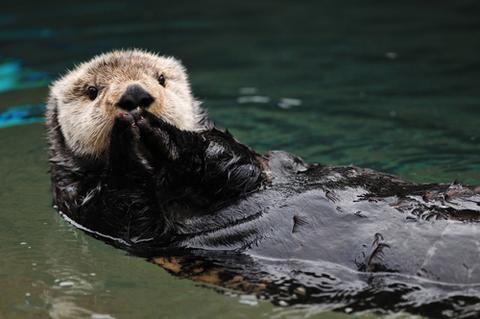 sea otter endangered animals