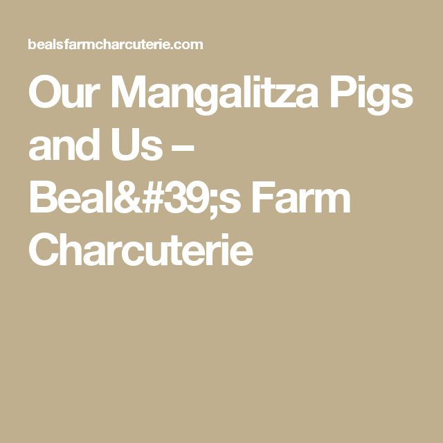 Our Mangalitza Pigs and Us – Beal's Farm Charcuterie