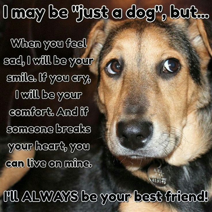 Hi Dou You Want To Know About Your Pet Read All Https Www Marshallspetzone Com Blog Dogs Dog Quotes I Love Dogs