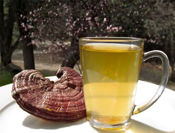 Reishi Mushroom Tea Recipe + Benefits