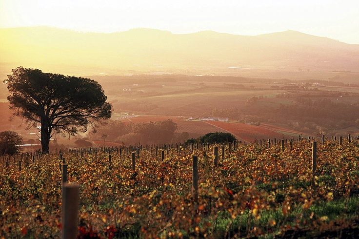 Stellenbosch winelands, Western Cape, South Africa
