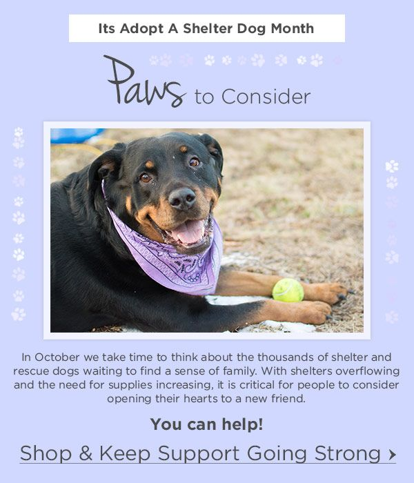 It S Adopt A Shelter Dog Month Oct 1 2018 Https Www Greatergood Com Emails 2018 Post 100118 Ars W Html Dog Waiting Animal Rescue Site Animals