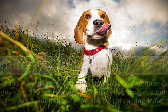 Professional Pet Photography | Dog Photos | Brighton Dog Photography