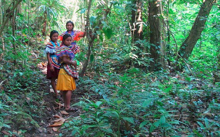 Indígenas aseguran que si no se frena la corrupción de las autoridades y los daños ambientales, la Selva Lacandona podría desaparecer en tan sólo 10 años.