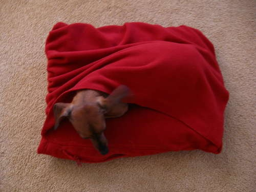 dog bed made from pillow and men's fleece zip jacket