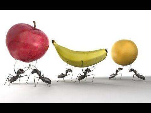 El ácido bórico es uno de los insecticidas más utiles que encontrarás. En tan sólo 24h y sin los malos olores del insecticida tradicional verás como desaparecen hormigas y cucarachas. Puedes comprar ácido bórico aquí: https://www.alquera.com/acido-borico/ y leer más sobre sus propiedades aquí: http://acidoborico.net/